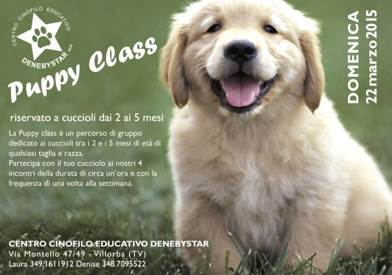 puppy class marzo